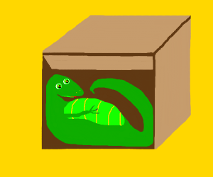 fat lizard in box