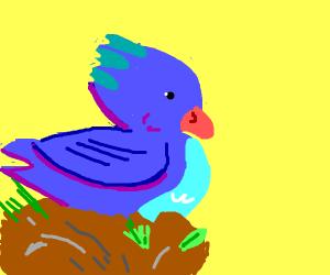 blue birb looking cute