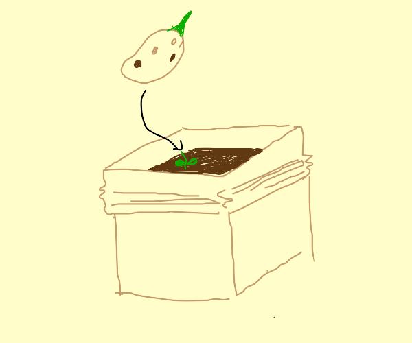 Sprouting potato in a box