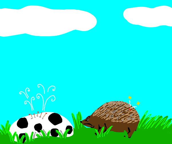 hedgehog pops soccer ball now is mad