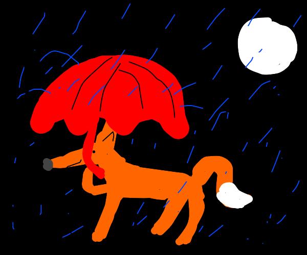Fox in the rain at night