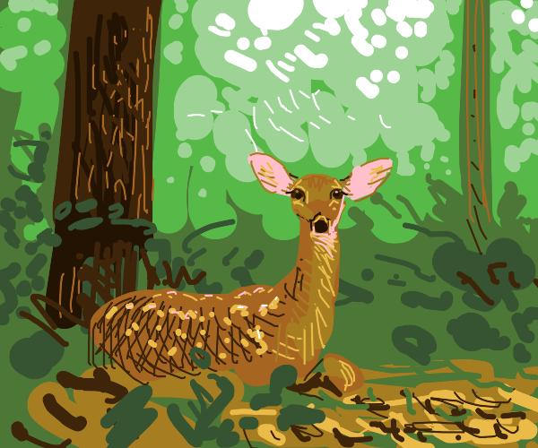 Cute deer in the woods