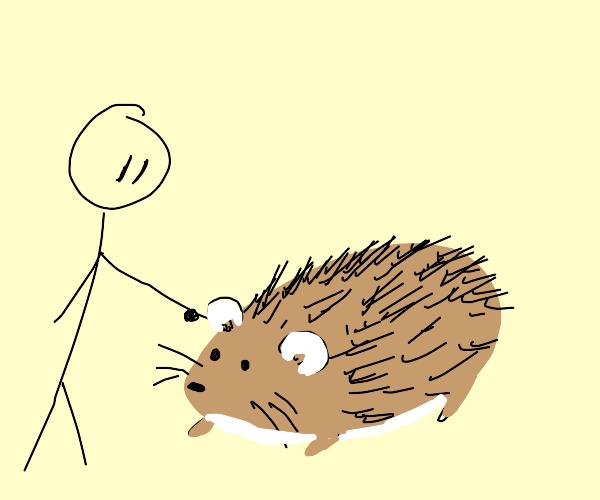 Man touches Hedgehog