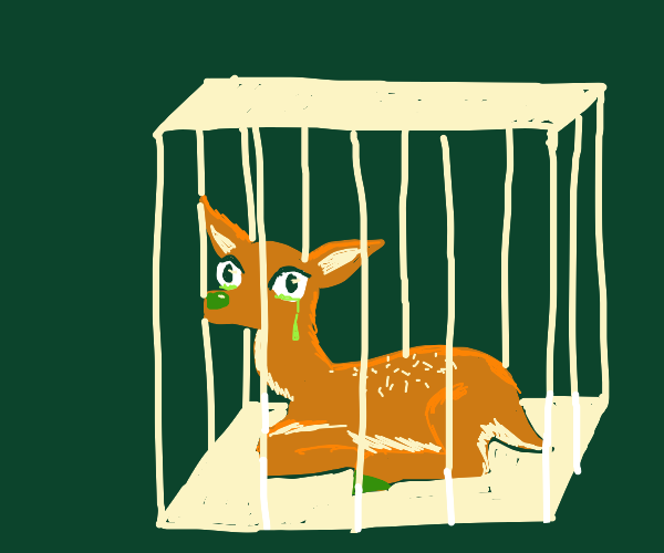 Crying deer in a trap.
