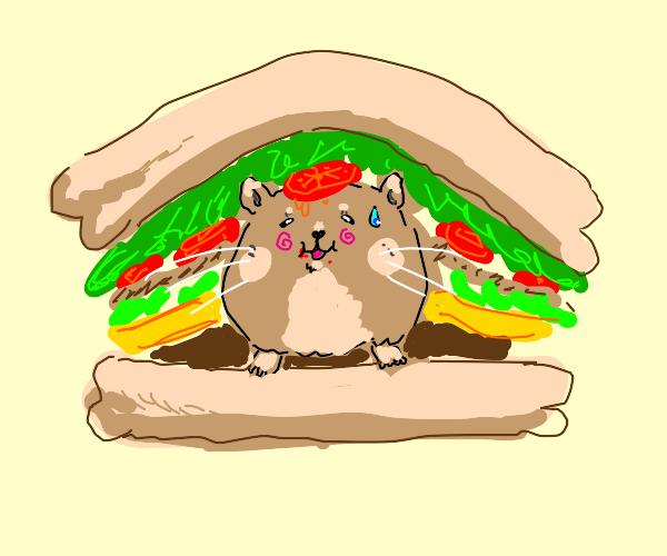 A hamster Sandwich