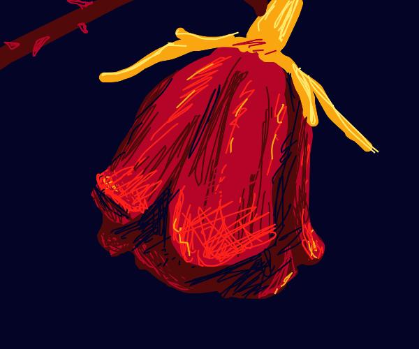 wilting rose