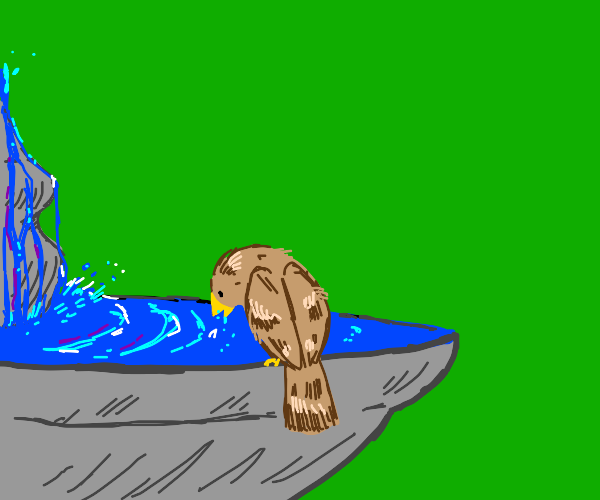 bird drinks from fountain