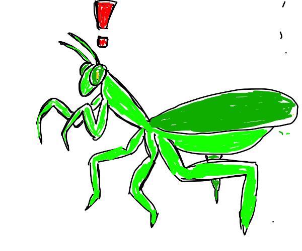 Shocked praying mantis