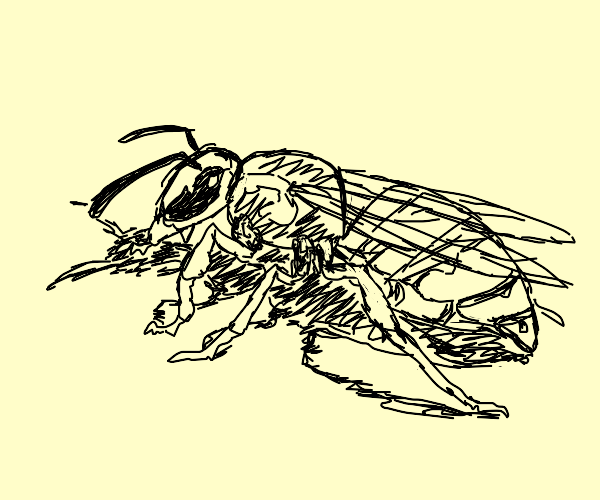 Painter wasp