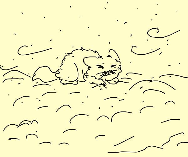Cat in a snowstorm