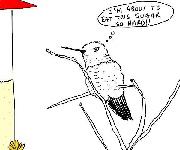 Hummingbird Planning