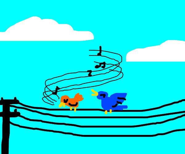 Birds singin on power line
