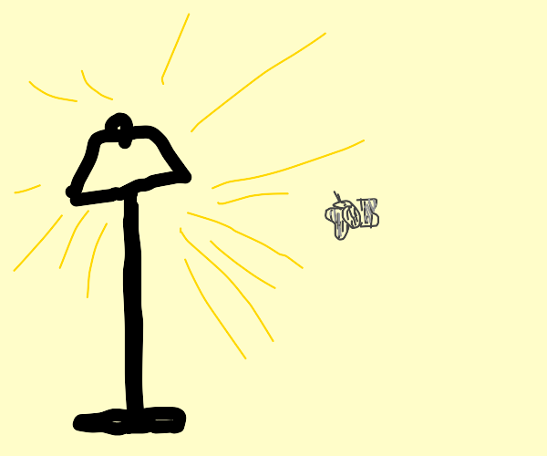 Moth is curious about lamp