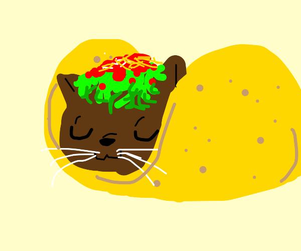 Taco cat is happy