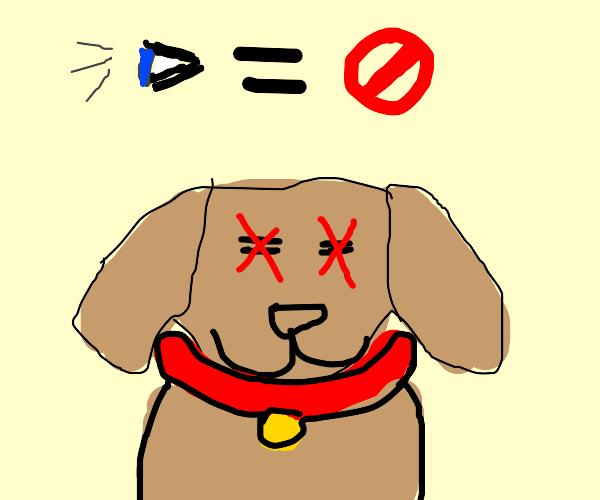 Lack-of-Seeing-Eye Dog