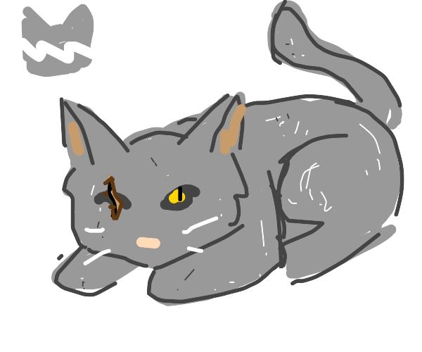 Thunderclan cat