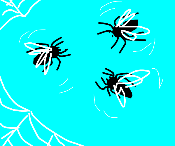 Spiders with fly wings