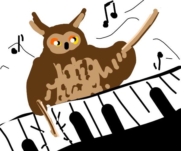 Owl Plays Piano Using Drumsticks, Good Music!