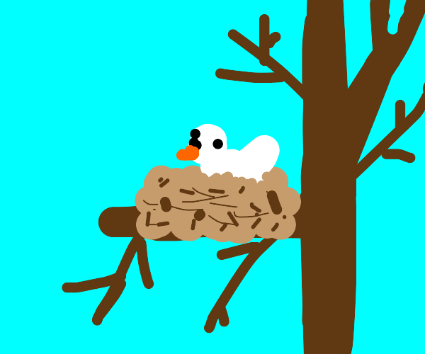 Dove in a Nest