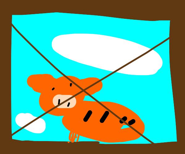 orange striped pig visible through window
