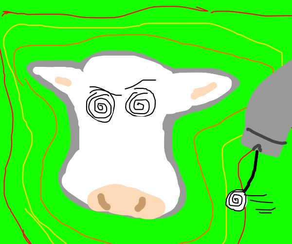 hypno cow