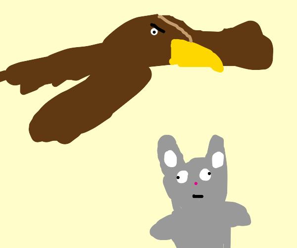 Hawk hunting rabbit
