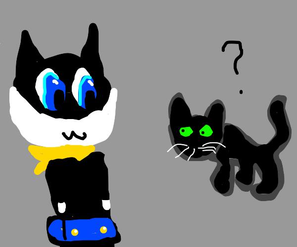 cat person finds cat