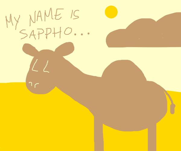 friendly camel