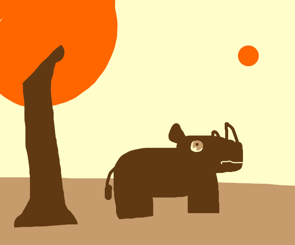 Rhino stares at the sun