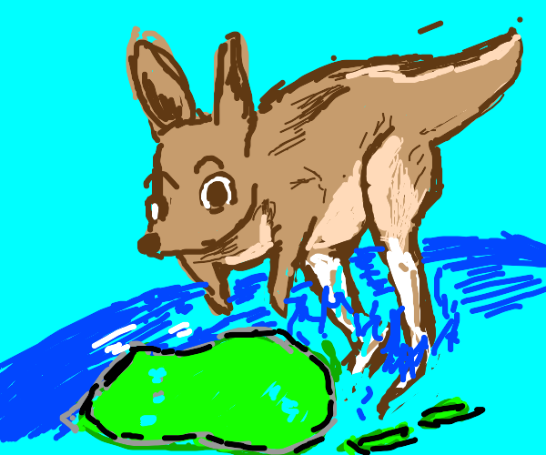 Kangaroos hopping around Australia