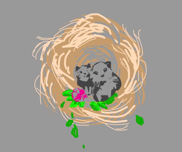 Cat. Nest.