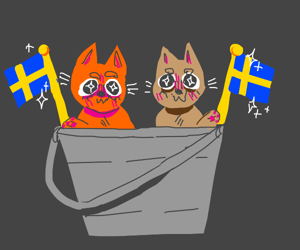 Swedish cats in a bucket
