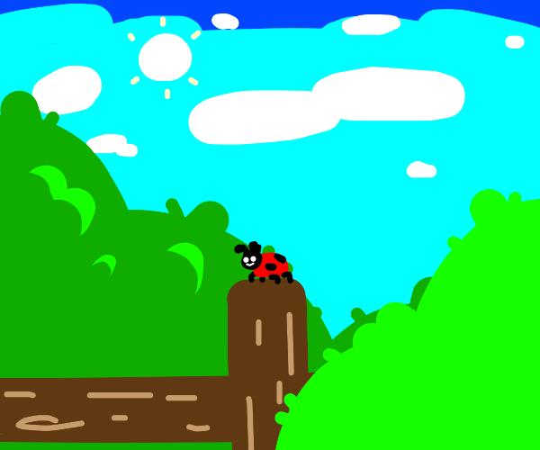 Cut little ladybug is on the fence