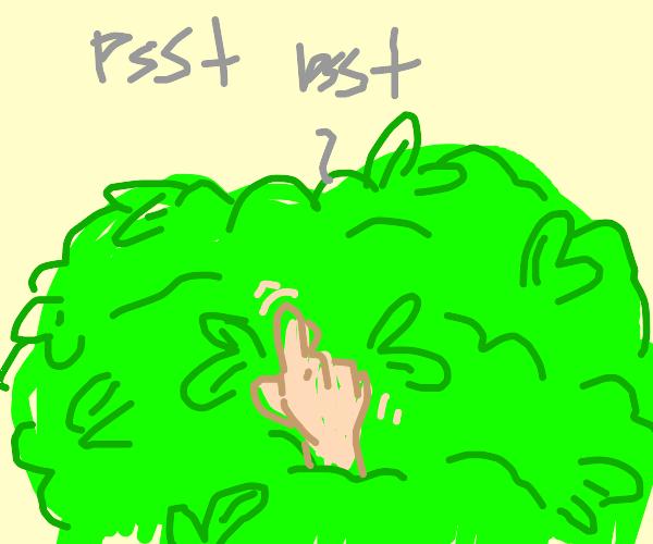 hand among leaves