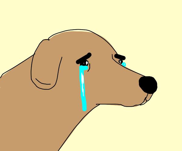 Crying doggo