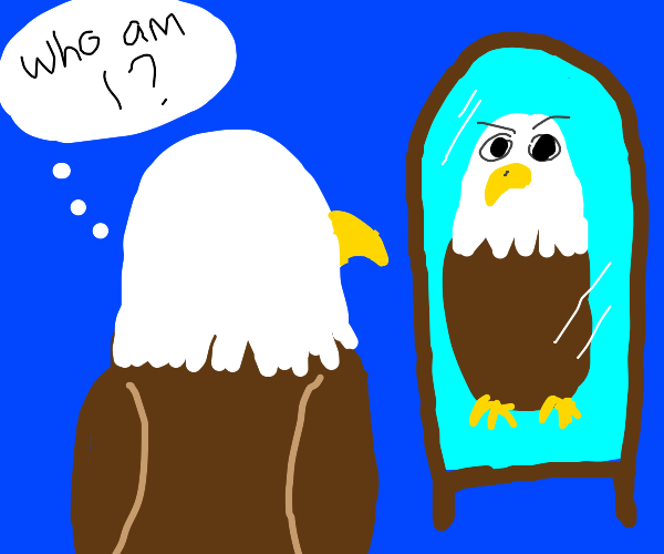 Bald eagle questions his existence