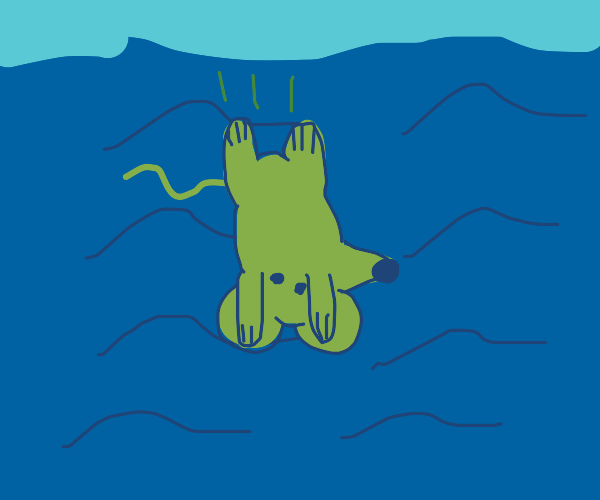 A rat thinks it's a fish and dive under water