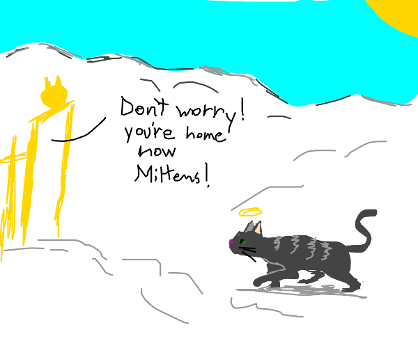 A cat goes to heaven