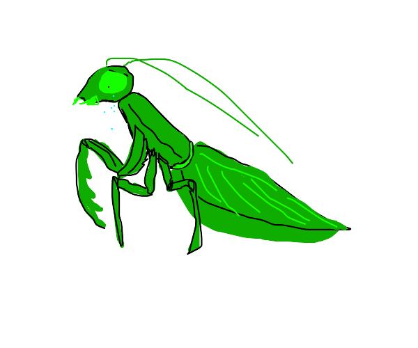 sad mantis