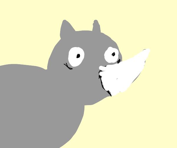 Surprised rhinoceros