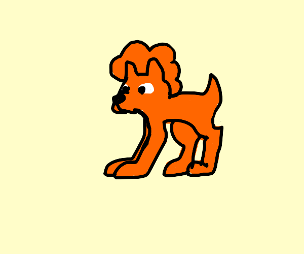 Loving Shiba Dog Wearing Orange Clown Wig