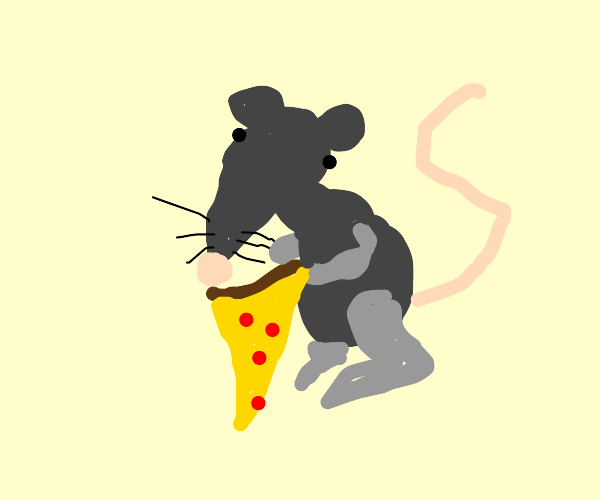 rat eating pizza