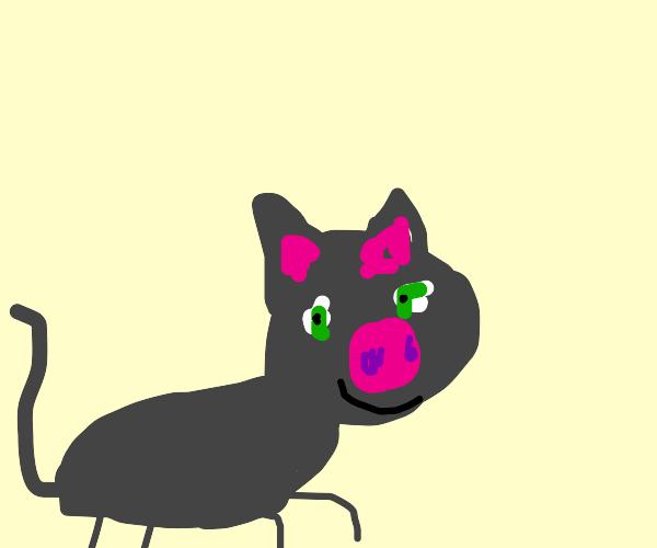 Pig cat