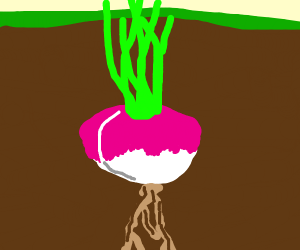 Turnip underground
