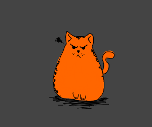 Angry orange cat