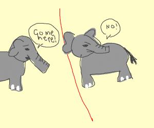 Elephant won't cross the line