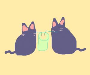Cats drinking lemonade