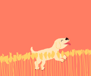 A dog in a wheat field