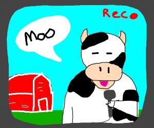 cow news presenter