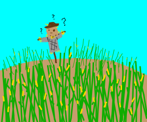 Confused scarecrow watches over the cornfield